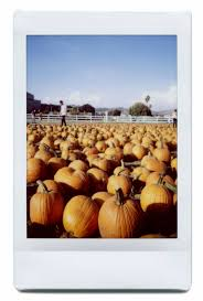 Cal Poly Pomona Annual Pumpkin Patch by Pumpkins United By Pizza