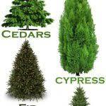 25 Unique Real Christmas Tree Ideas On Pinterest