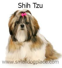 Non Shedding Dog Breeds Small by Small Non Shedding Dogs 3 Breeds N Through Z