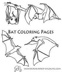 Bat Coloring Pages Free Printable Animal Sheets