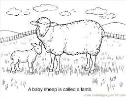 30 Sheep Coloring Page