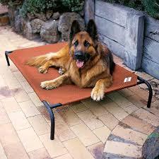 Kuranda Dog Beds by Furniture Coolaroo Dog Bed Kuranda Bed Discount Code Pet Cots