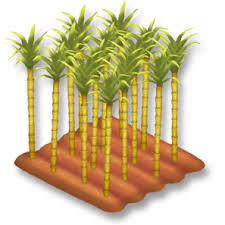 Crops Clipart Sugarcane Field Hay Day Wiki Fandom