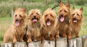 Low Shedding Dogs List by 15 Of The Cutest Dogs That Don U0027t Shed A Lot Pet Hair Hq Pet