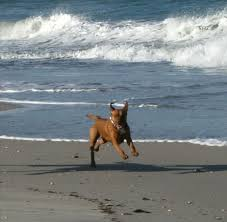 pets welcome across from the beach vrbo