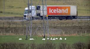 31.12.16. Birdlog | Frodsham Marsh BirdBlog Police Florida Man Kicks Swans Sleeping Duck While Practicing Swan Hill Fire Controlled The Guardian Toyota Hilux Animal Ambulance Carries Precious Cargo Uk Creek Landscaping Crew Our Fleet Equipment Pinterest Trumpeter Invade Valley Environmental Jhnewsandguidecom Schwans Company Wikipedia Blackburnnewscom Swans Found Dead At Luther Marsh 311216 Birdlog Frodsham Birdblog Tyreswanorama Car Wrecker Valley Perth Cash For Cars Removal Suburbs Rescue Southport Visiter
