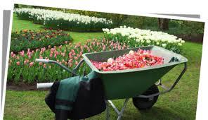 fleur et plante du lac etre bien équipé pour s occuper de jardin fleurs plantes