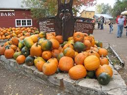 Columbus Pumpkin Patch by 11 Smashing Good Pumpkin Patches Mnn Mother Nature Network
