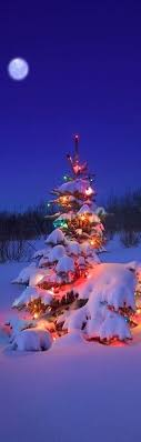 Christmas Tree Glow Nature Snow Winter Wonderland Holidays