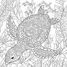 Turtle Coloring Page Adult Book By ColoringPageExpress