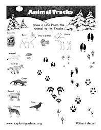 Match Animals To Their Tracks In Two Days Well Post A Clue Check The Answers Funny Weve Just Played It