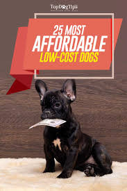 Non Shedding Small Dogs Australia by 25 Most Affordable Low Cost Dog Breeds That Anyone Can Adopt