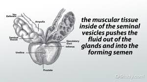 Shedding Of Uterine Lining by The Uterus And Uterine Wall Structure And Parts Video U0026 Lesson