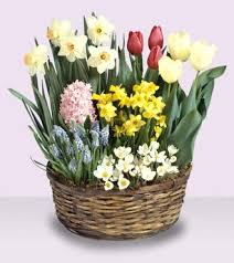 s day gift baskets