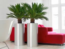 pflanzenpflege umpflanzen akzente pflanzen design berlin