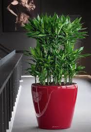 pflanzen für wohnräume mit wenig licht