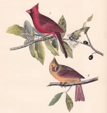 Original Audubon Prints