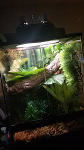 Crested Gecko Shedding Behavior by Getting Worried About My Giant Day Gecko Desperate For Help