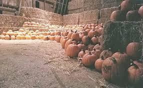 Pumpkin Farm Illinois Best by Sugar Grove Pumpkin Farm