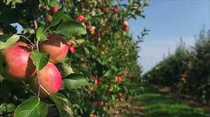 The South s Best Apple Orchards Southern Living