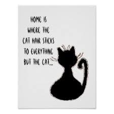 cat quotes cat quotes posters zazzle
