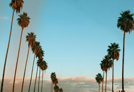 California Tumblr Photography Palm Trees Wallpaper WSW2025191