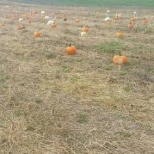 Pumpkin Patch Denver Pa by Lentini Corn Maze Pumpkin Patches 251 High St Newton Nj