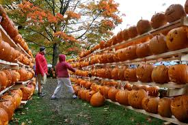Pumpkin Festival Keene by Pumpkin Pause Council Sends Festival Back To Committee Local