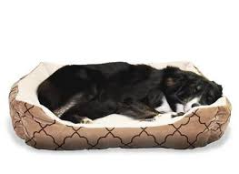 Top Rated Orthopedic Dog Beds by Best Orthopedic Dog Bed For Small Dogs Noten Animals Dog Beds And