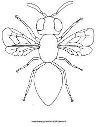 Beetle Coloring Pages Insects Within Insect Color