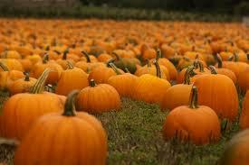 Old Auburn Pumpkin Patch by 7 Pumpkin Carving Ideas Her Campus