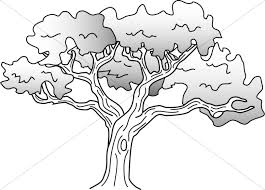 Leaves Coloring Pages Oak Tree Simple Drawing