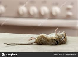 100 Mouse Apartment Dead Kitchen High Rise Buildings Fight Rodent