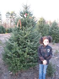 Xmas Tree Farms Albany Ny by Holiday Events Seasonal And Just Plain Fun Things To Do With