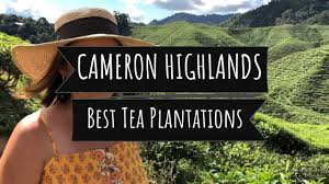 100 Bali Tea House Cameron Valley 1 Or 2 Or Boh Plantation Cameron Highlands Malaysia Travel Guide