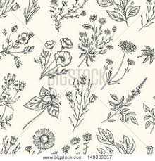 Wild Flowers And Herbs Seamless Floral Pattern Botanical Drawing Engraving Style Harebell