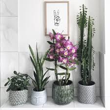orchideen deko tipps für jeden wohnstil sophiagaleria