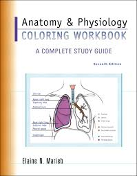 Marieb Anatomy Physiol Cool And Physiology Coloring Book