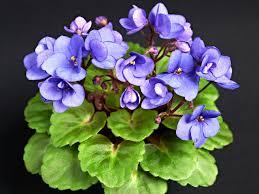 Best Plants For Bathroom No Light by Indoor Plants Low Light Hgtv