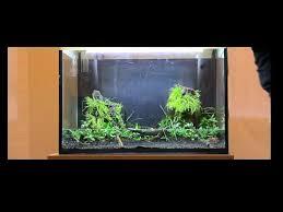 lots de plantes d aquarium pour débutant paysage aquatique n 47