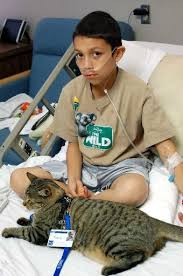 service cats 18 best service animals images on service dogs