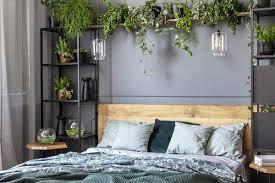 die 8 besten pflanzen fürs schlafzimmer selbermachen de