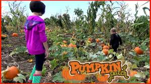 Heather Farms Pumpkin Patch by Lone Pine Farm Halloween Pumpkin Patch Mining Pumpkin Hunting