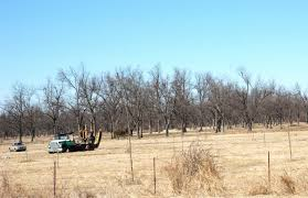 100 Seedling Truck Northern Pecans Moving In A New Orchard
