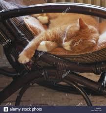Rocking Chair, Detail, Cat, Sleep, Portrait, Flat, Animals ...