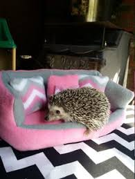 Ceramic Heat Lamp For Hedgehog by What Do Hedgehogs Eat Hedgehogs Animal And Hedgehog Cage
