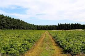 The 250 Acre Christmas Tree Farm In Highlands