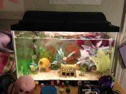 Spongebob Aquarium Decor Set by 10 Gallon Fish Tank Setup Youtube