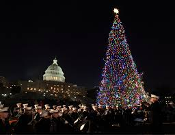Rockefeller Plaza Christmas Tree Cam by Christmas Tree Arrives At U S Capitol Overdrive Owner