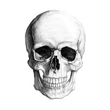 Kernie Cam Productions Skull Drawing found on Polyvore